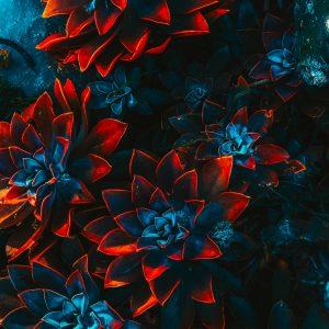 freelance-artist-floral-4
